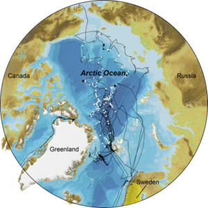 Figure 1. Expedition cruise tracks of the I/B Oden in the Arctic Ocean. White circles indicate locations of sediment cores logged by SU's MSCL during the past 20 years.